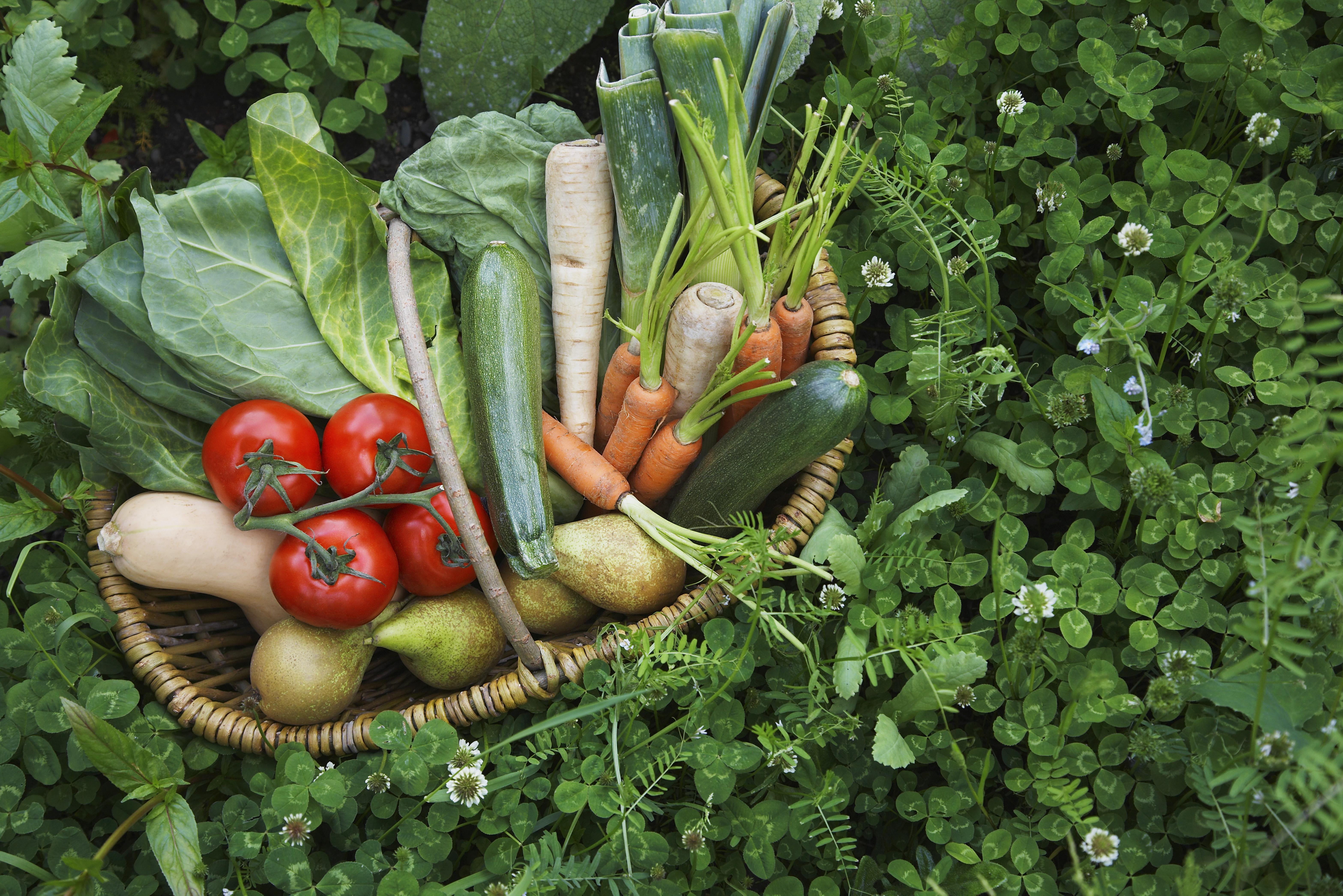 Kurv fyldt med grøntsager